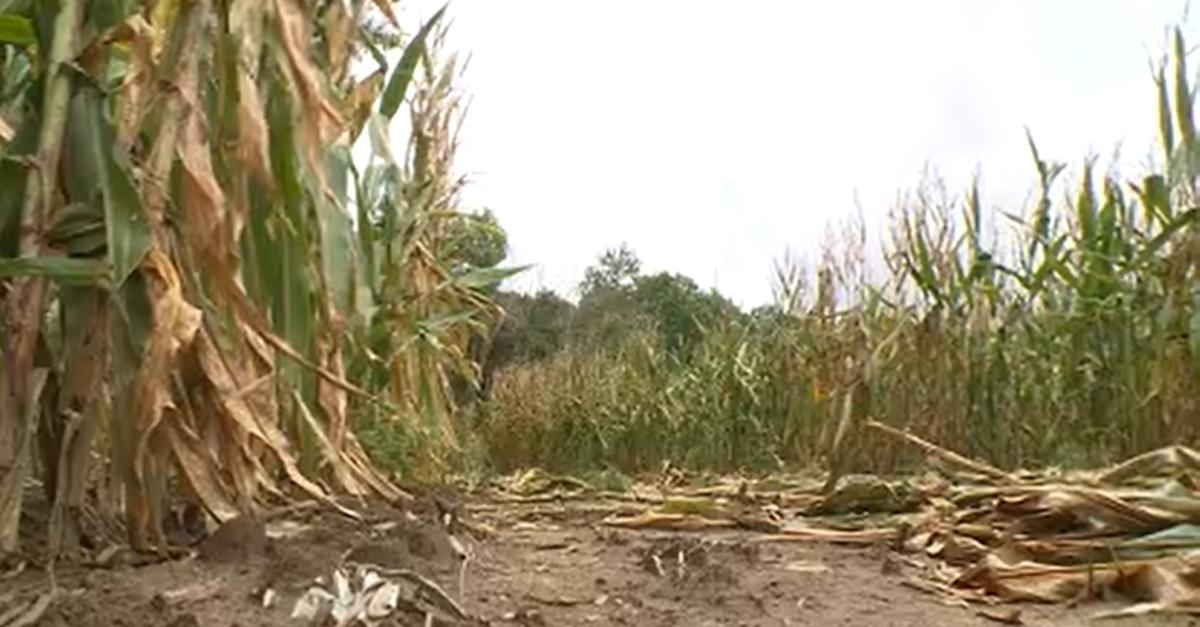 Cornfield where four people were found dead in SUV