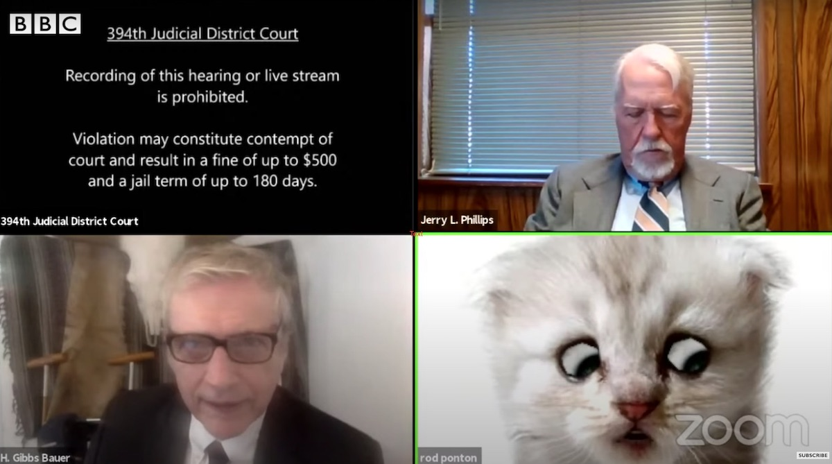 Lawyer's kitten zoom filter goes viral